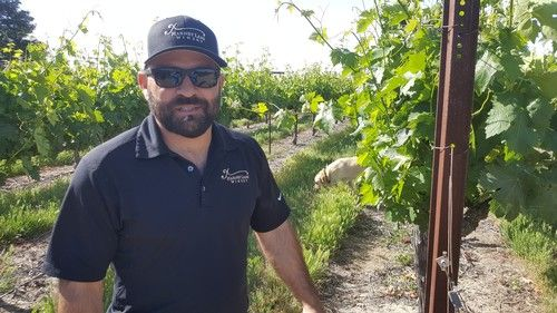 The story of Lodi vineyard manager Luis Reyes and his red-hooded sweatshirt