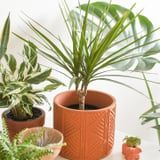 9 Houseplants Perfect For Apartments That Don't Get a Lot of Natural Light