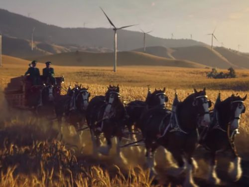 Budweiser's Super Bowl Commercial Has Clydesdales Galloping to Bob Dylan's 'Blowin' in the Wind'
