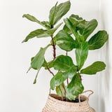 Show Your Houseplants How Much You Care With These 31 Punny Plant Names