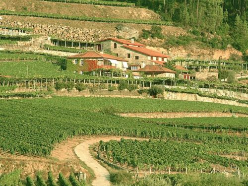 Sept 7-8: Galician Wine Tasting