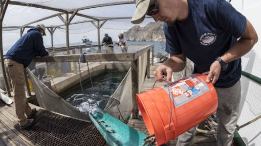 $40 Million Later, A Pioneering Plan To Boost Wild Fish Stocks Shows Little Success