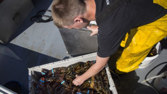Warming Waters Push Fish To Cooler Climes, Out Of Some Fishermen's Reach