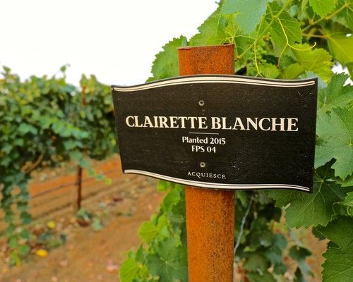 Acquiesce adds Clairette Blanche and Bourboulenc to their industry leading portfolio