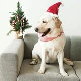 28 Holiday Pet Photos That Will Make It a Very Happy Holidays Indeed