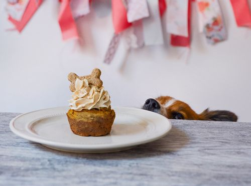 Peanut Butter Frosted Pupcake