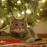 Cats May Lay Under the Christmas Tree Because It Makes Them Feel Safe - Awww!