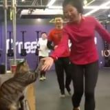 This Cat Gives High Fives at a CrossFit Gym, and Wow, Best Cheerleader Ever?