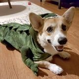 Halloween Is Won and Done Thanks to These Corgis in Stegosaurus Costumes