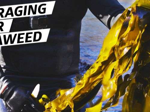 How Chef Jacob Harth Harvests and Cooks Wild Seaweed