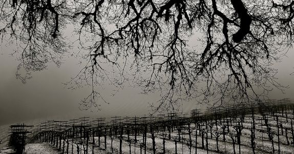 Killer Boo-quet: 10 American Wineries With Haunted Histories