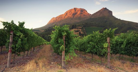 Wine 101: South Africa