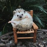 Just a Reminder: If You're Not Following Lionel the Hedgehog, You Should
