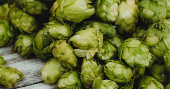 From Trial to Trellis: How Hop Breeders Determine the Frontier of Flavor