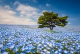 """Is """"Flower Chasing"""" the New """"Leaf Peeping""""? 10 Destinations to See the Most Stunning Spring Flowers"""