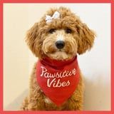13 Doggone-Cute Old Navy Bandanas and Tees, So Your Pup Can Summer in Style
