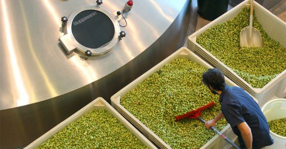Crushing on Citra: The High-Impact Hop in Your Favorite IPA