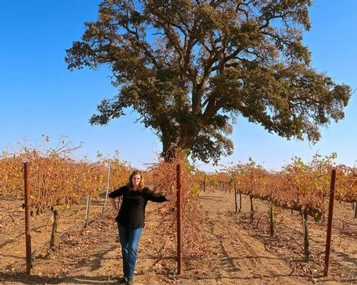 LangeTwins Family adds a classically Lodi Barbera to its groundbreaking line of vineyard-designates