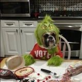 This Dog Dressed Up as the Grinch Is Here to Steal Christmas, and We Aren't Even Mad