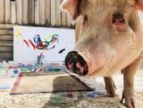 "Holy Crap - There's a Pig Called ""Pigasso"" Who Paints With His Mouth"