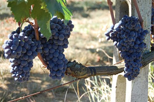 """Soldera: The """"stubborn genius"""" and """"heretic"""" of Brunello. Remembrances of an iconoclast winemaker"""