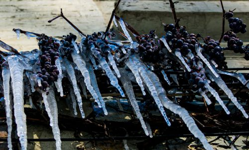 Europe's Late Frost Goes Farther Than France - and Well Beyond Wine