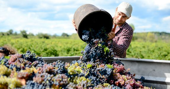 We Asked Winemakers: What's Your Go-To Drink After a Long Day During Harvest?
