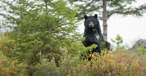 Bear Breaks Into Tennessee Cabin, Steals Beer and Snacks