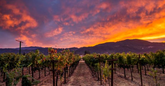 Tradition Meets Innovation at Sequoia Grove Winery