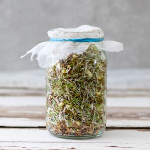 Grow Sprouts in a Jar | 3 Easy Step