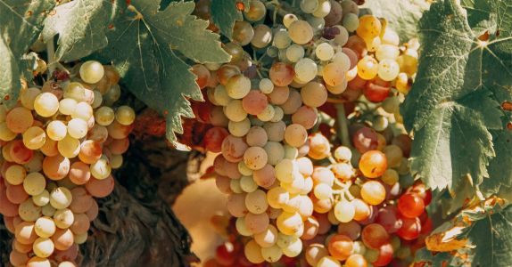 Why Winemakers Are Using Flash Pasteurization