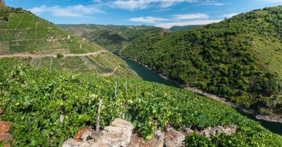 Old Vines and New Ideology: Spain's Wine Industry Has Never Been More Exciting