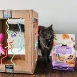 15 DIY Cat Toys to Keep Your Feline Friend Happy and Healthy