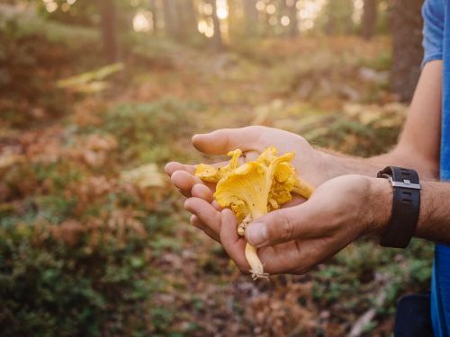 Mushroom Hunting at the End of the World