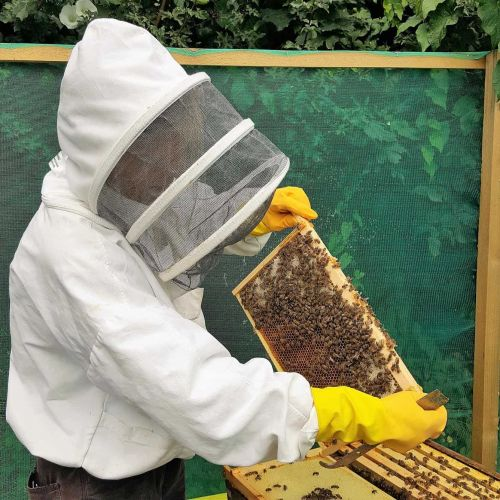 Buzzing for British Honey: Emily Abbott Stresses the Importance of Local Products