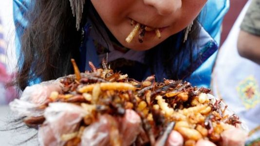 Your Ancestors Probably Ate Insects. So What's Bugging You?