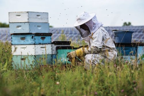 How Brewers and Distillers Are Helping Honeybees