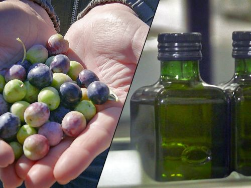 Watch: This California Ranch Is the Biggest Olive Oil Producer in the US